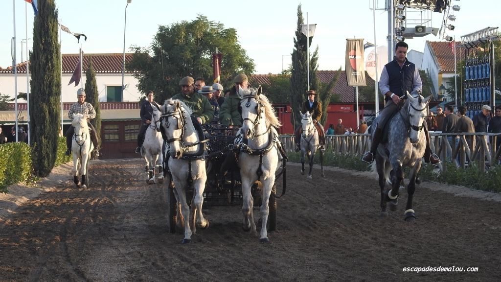 https://escapadesdemalou.com/2017/11/la-foire-nationale-du-cheval-a-golega/